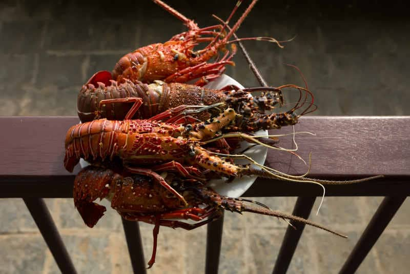 Tasty lobsters prepared with garlic on a plate